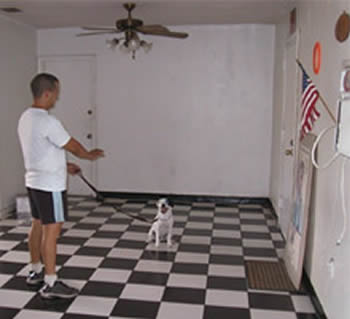 Canine Obedience Training
