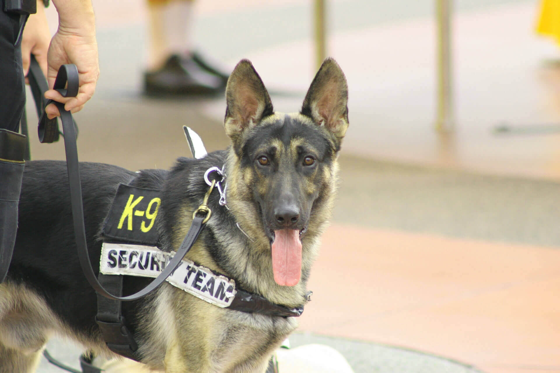 How To Train Police Dogs As A Career